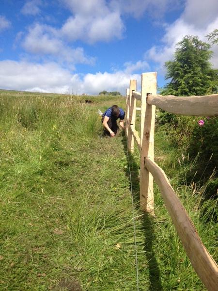 Diary 2015 Tudor style fence